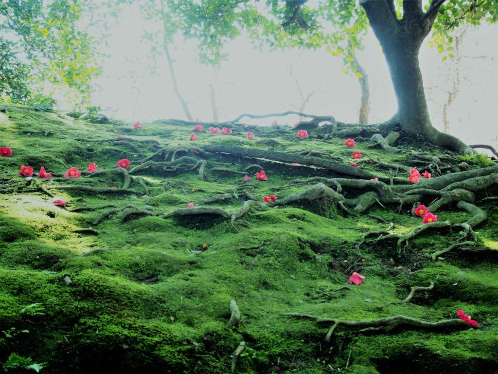 新緑の中に輝く椿