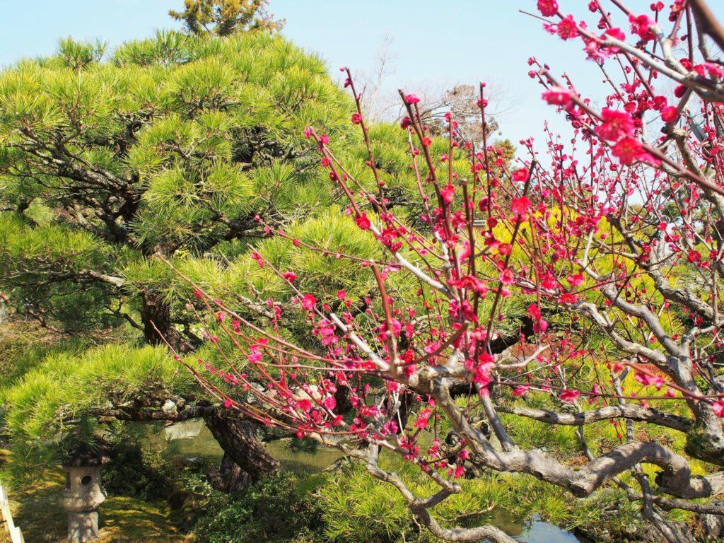 松と梅の共演