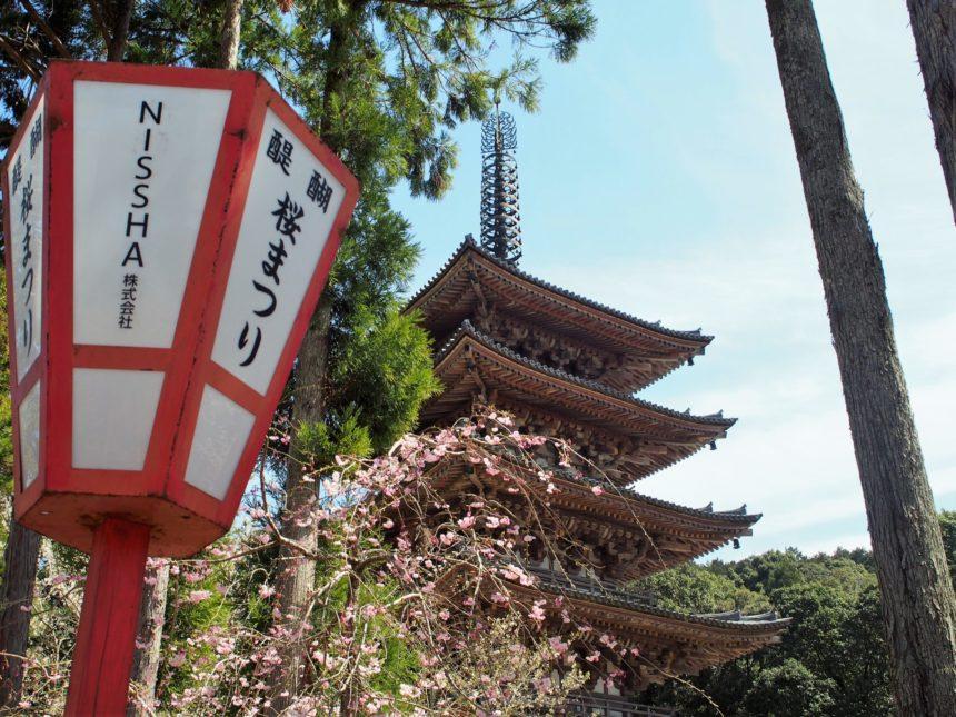 醍醐寺の桜まつり