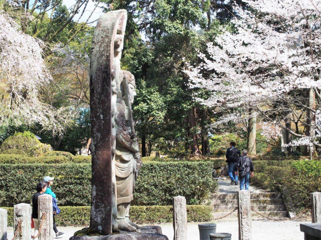 不動明王像の横顔と桜