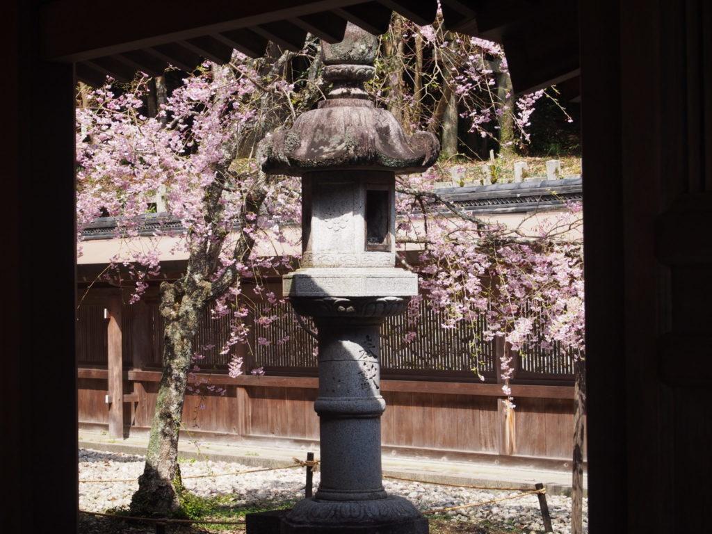 本殿奥の灯篭と桜