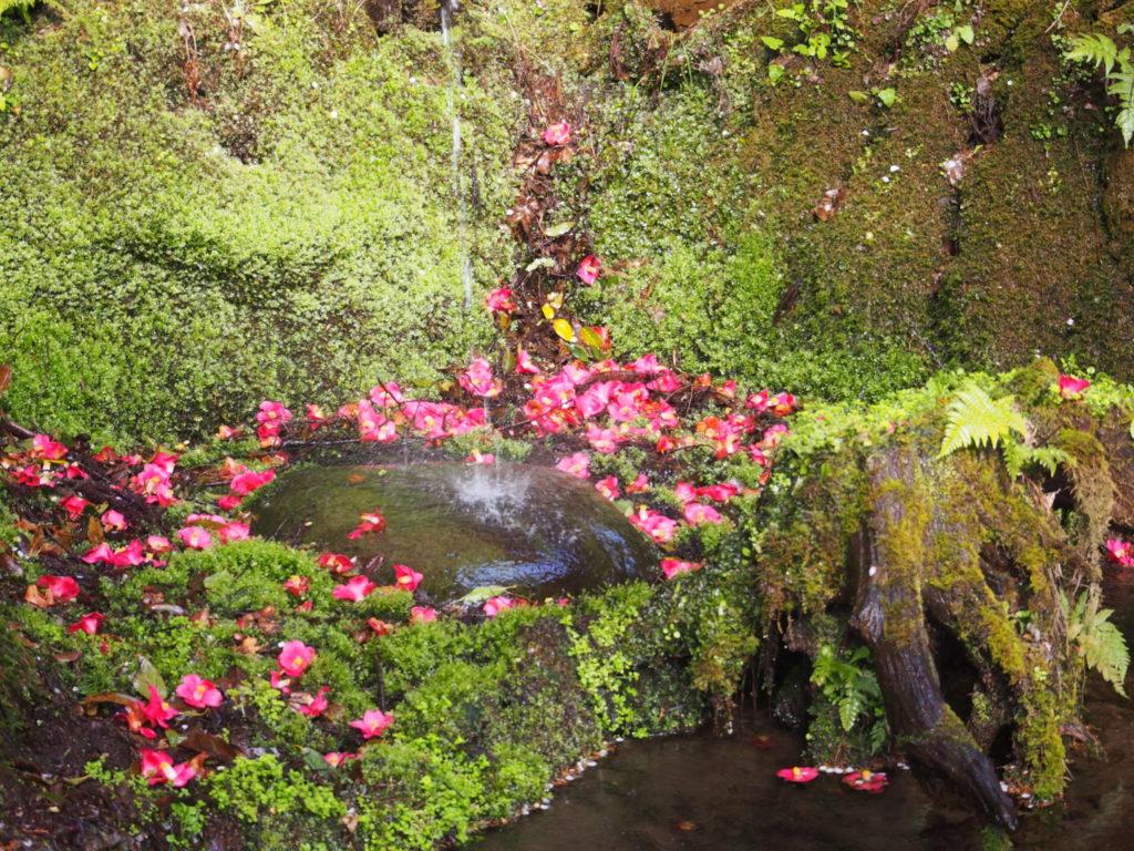 愛宕神社境内の湧水