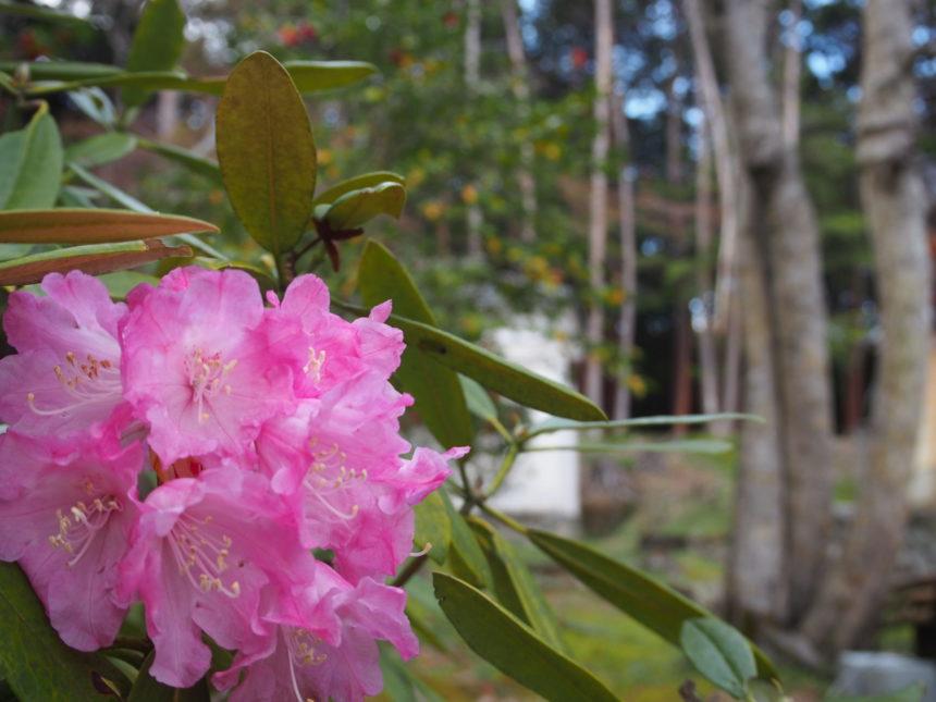 大原野神社の境内のお花