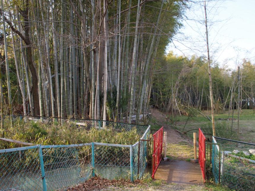 竹林に続く道