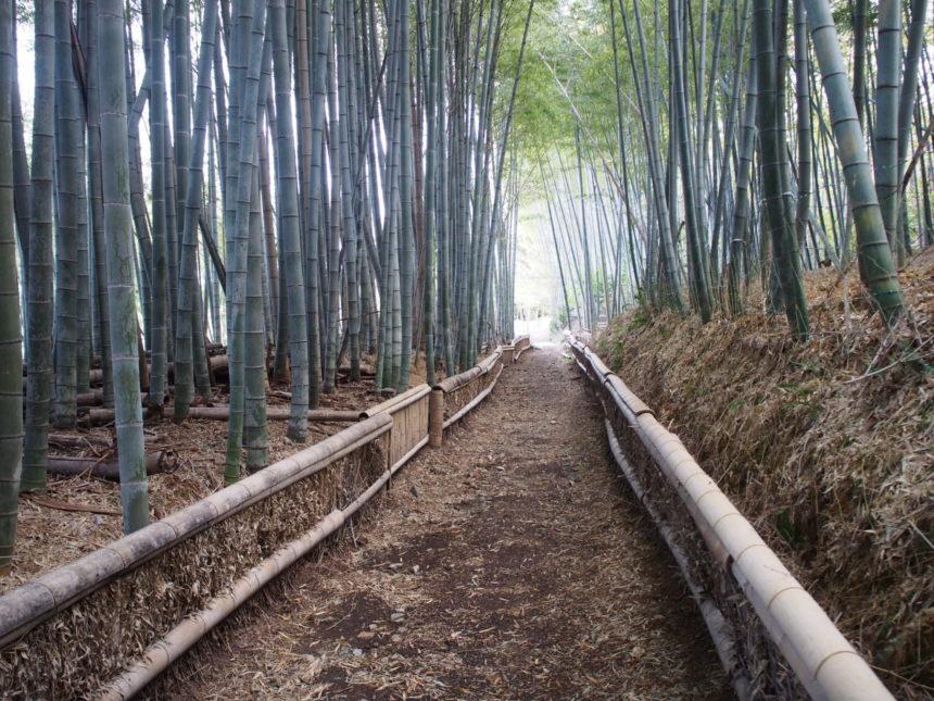 大原野神社の竹の道
