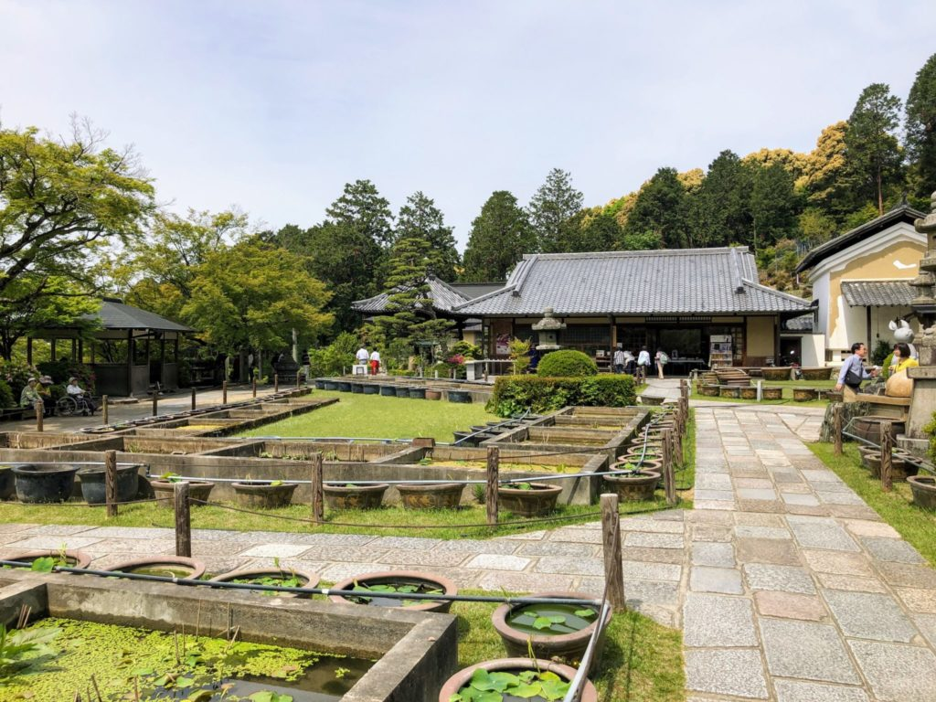 本堂前の蓮園