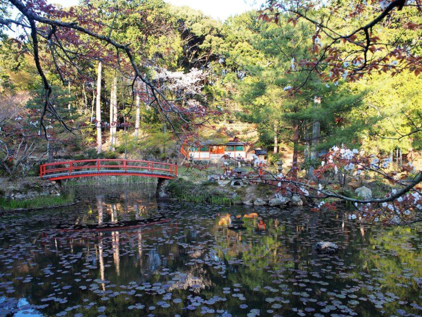 カキツバタや睡蓮で有名な「鯉沢の池」