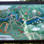 京都の三尾(高雄・槙尾・栂尾)めぐりのルートや行き方、所要時間は