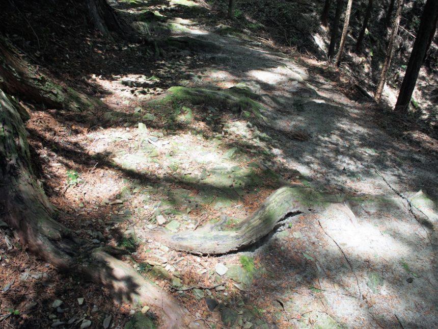 和気清麻呂公のお墓に続く木の根道
