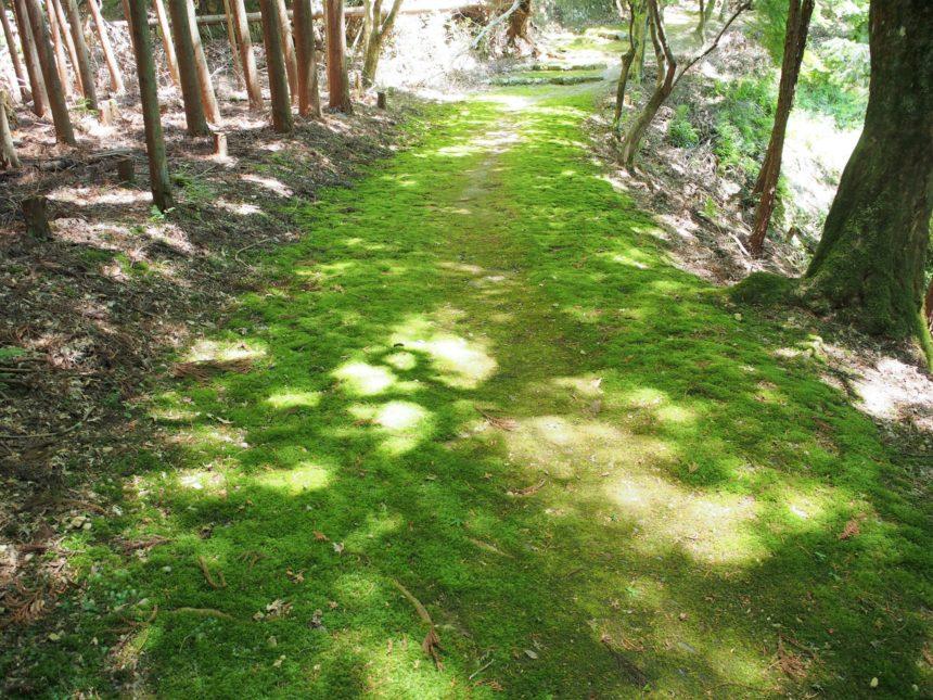 和気清麻呂公のお墓に続く苔の道