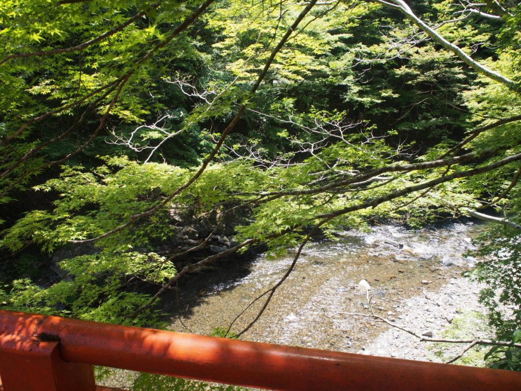 指月橋の下を流れる清滝川