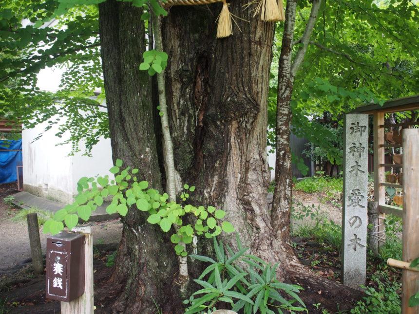 ご神木「愛の木」