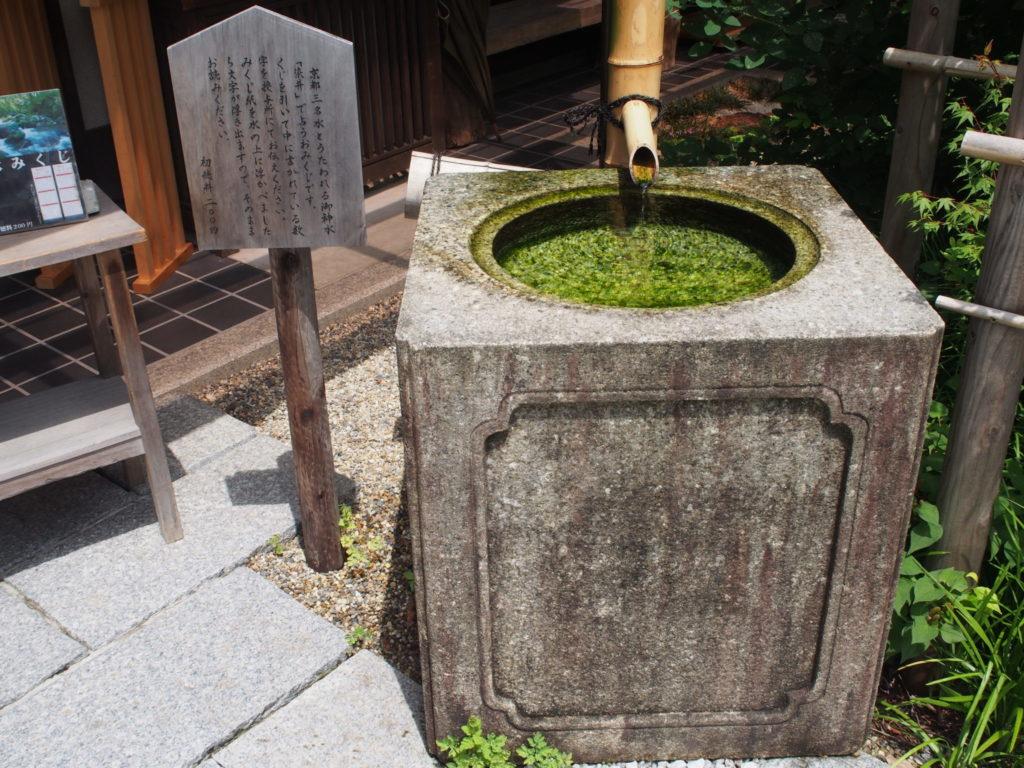 「染井」の水で占う