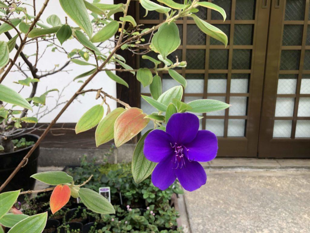 粟嶋堂の綺麗なお花