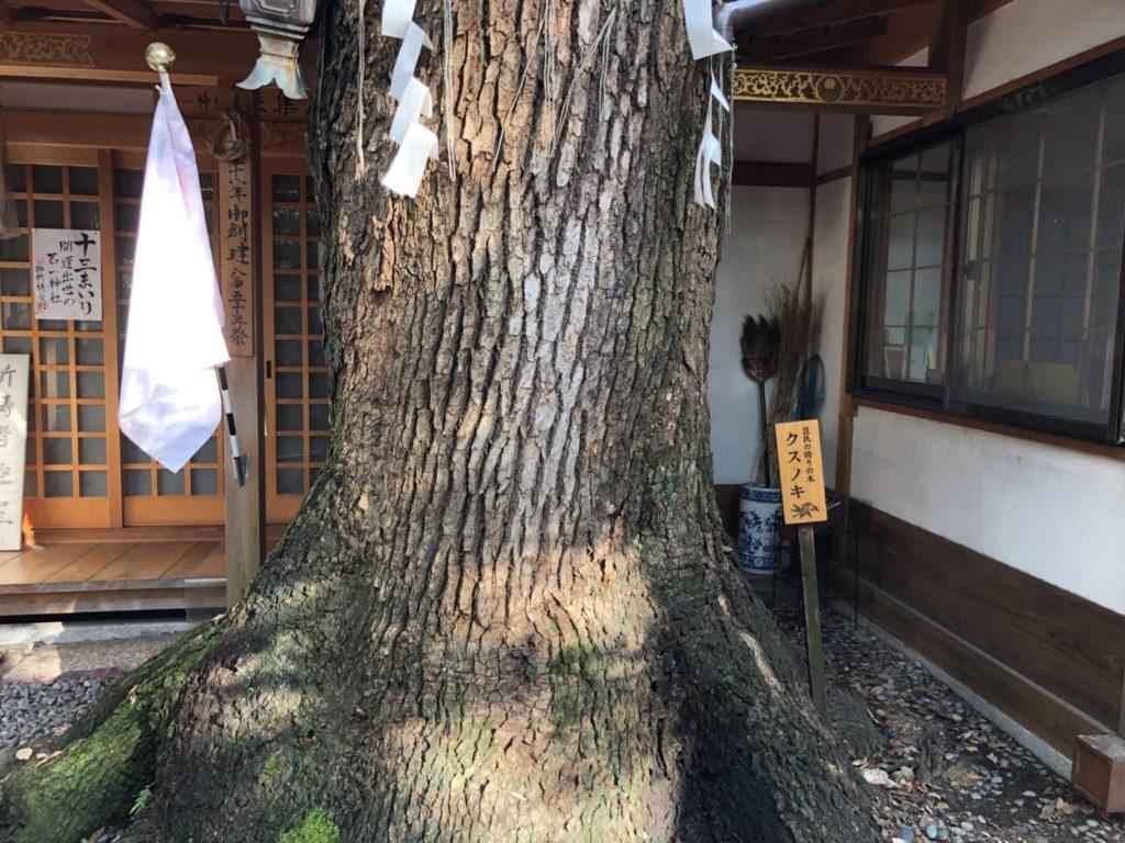 若一神社境内のご神木の下の部分