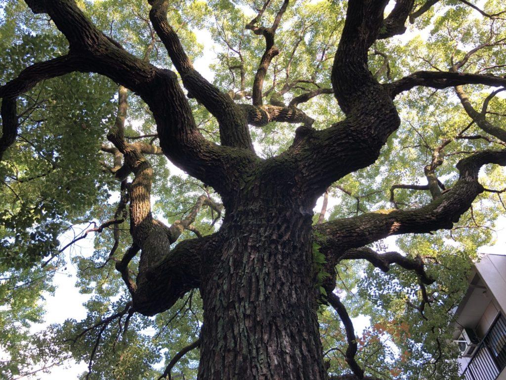 若一神社境内のご神木の上の部分