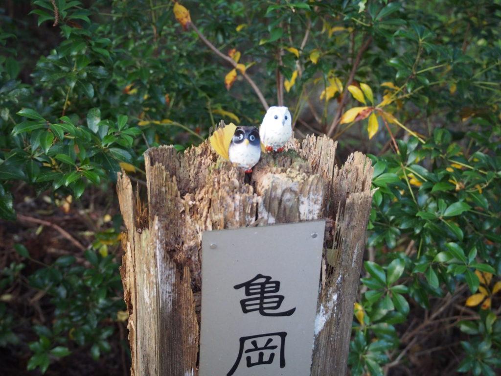 亀岡の夫婦フクロウ