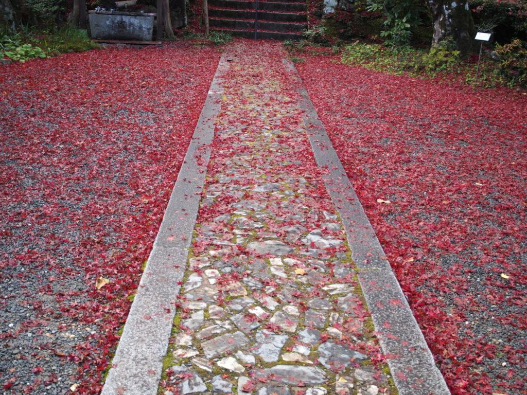 赤く染まりつつある道