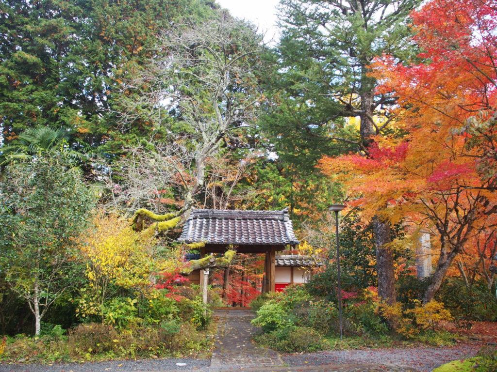 境内から山門と周辺の紅葉