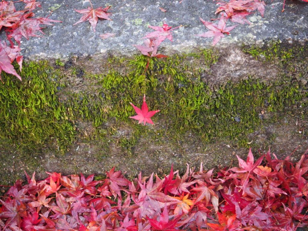 階段にも散った紅葉、そして苔も生えています
