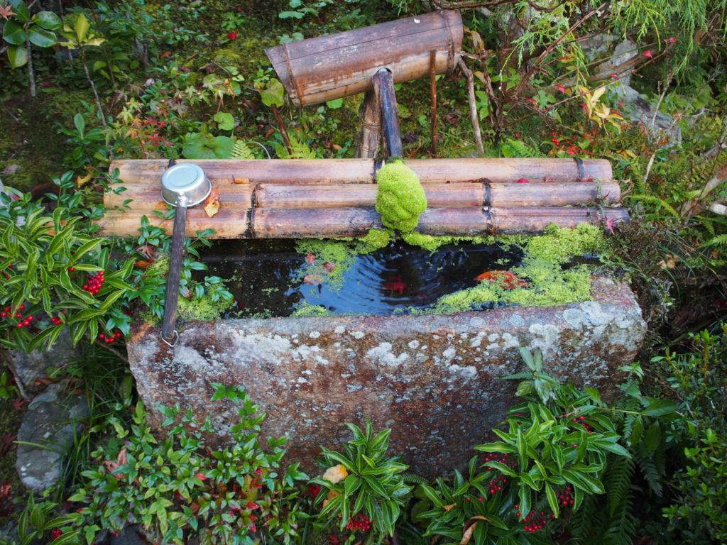 手水舎の水の出口が見事に苔丸