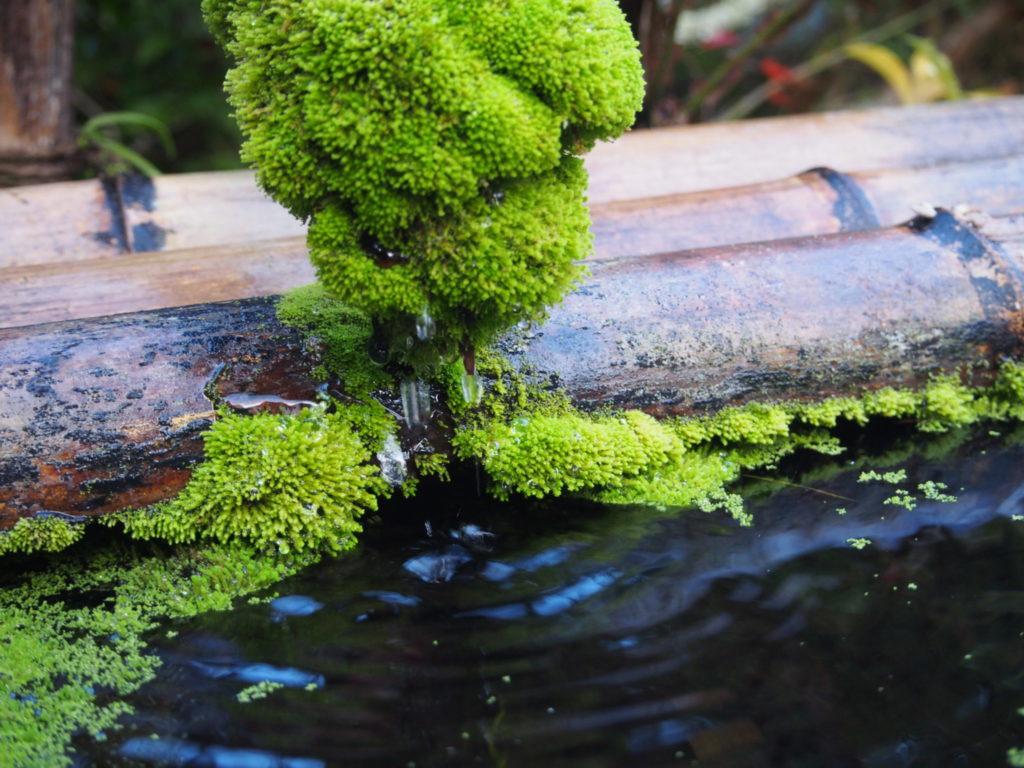 苔から滴る水滴