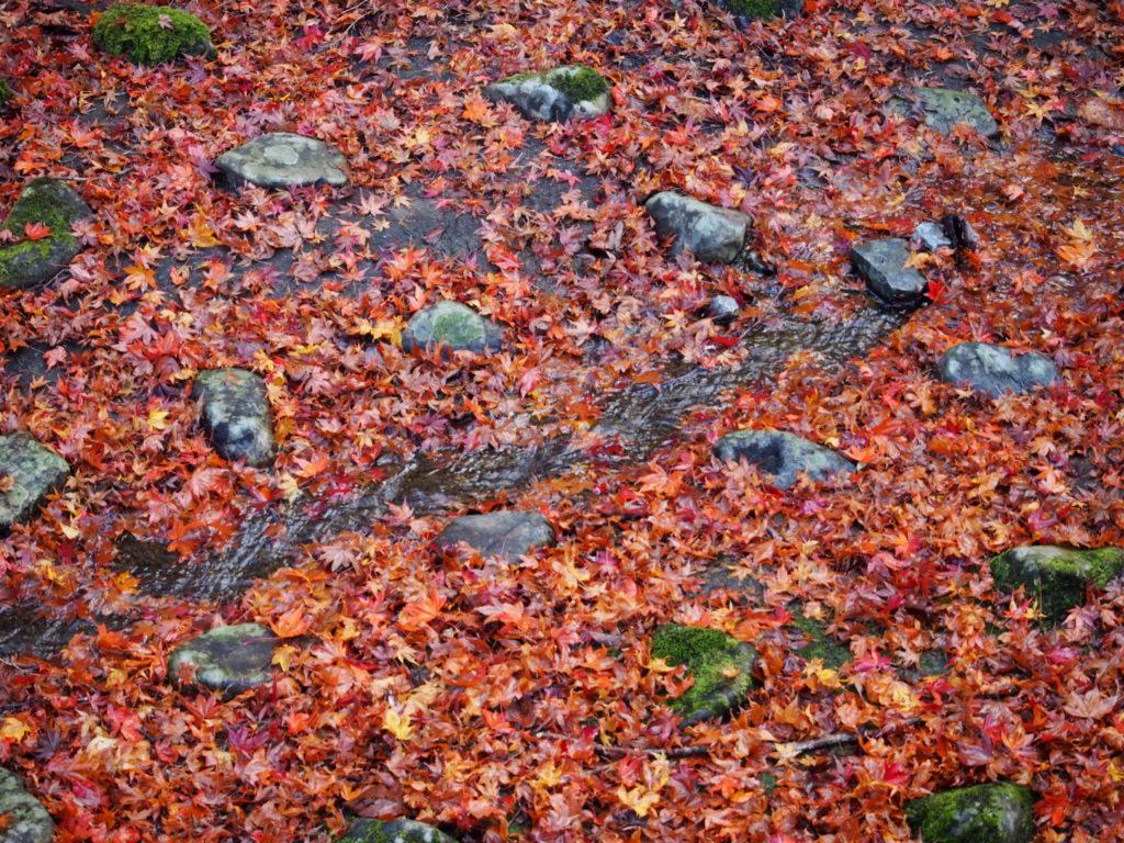 よーく見るとな水が流れていて、小石と苔、紅葉が綺麗です。