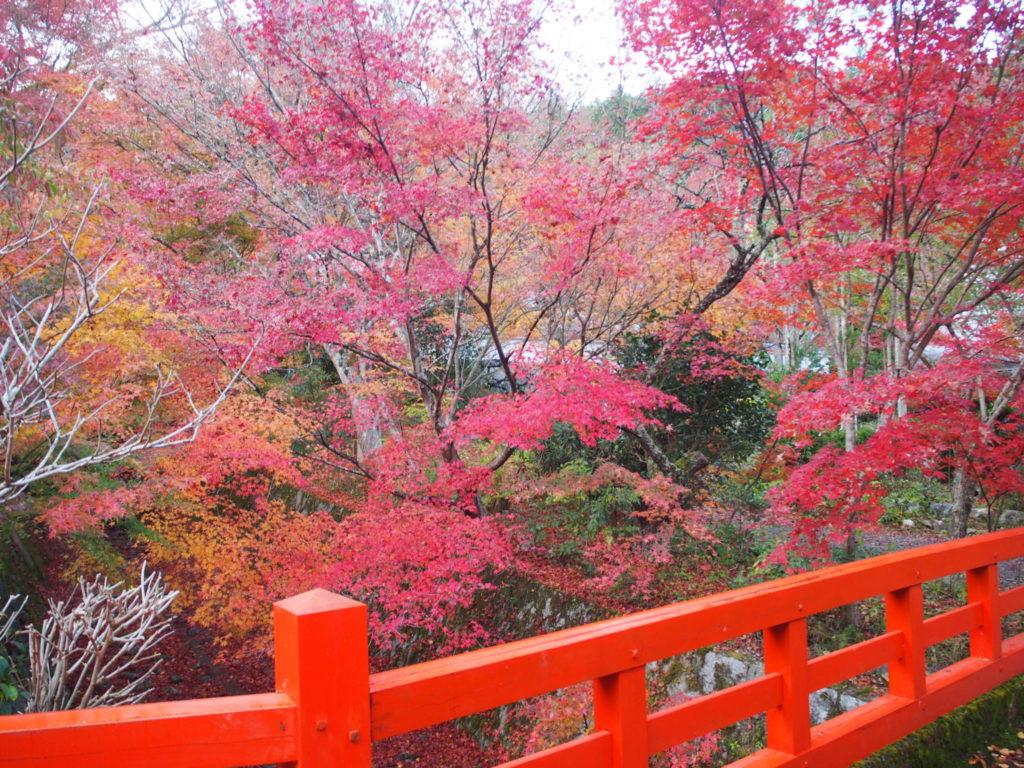 水がほとんど流れていない水路に架かる朱色の橋と紅葉