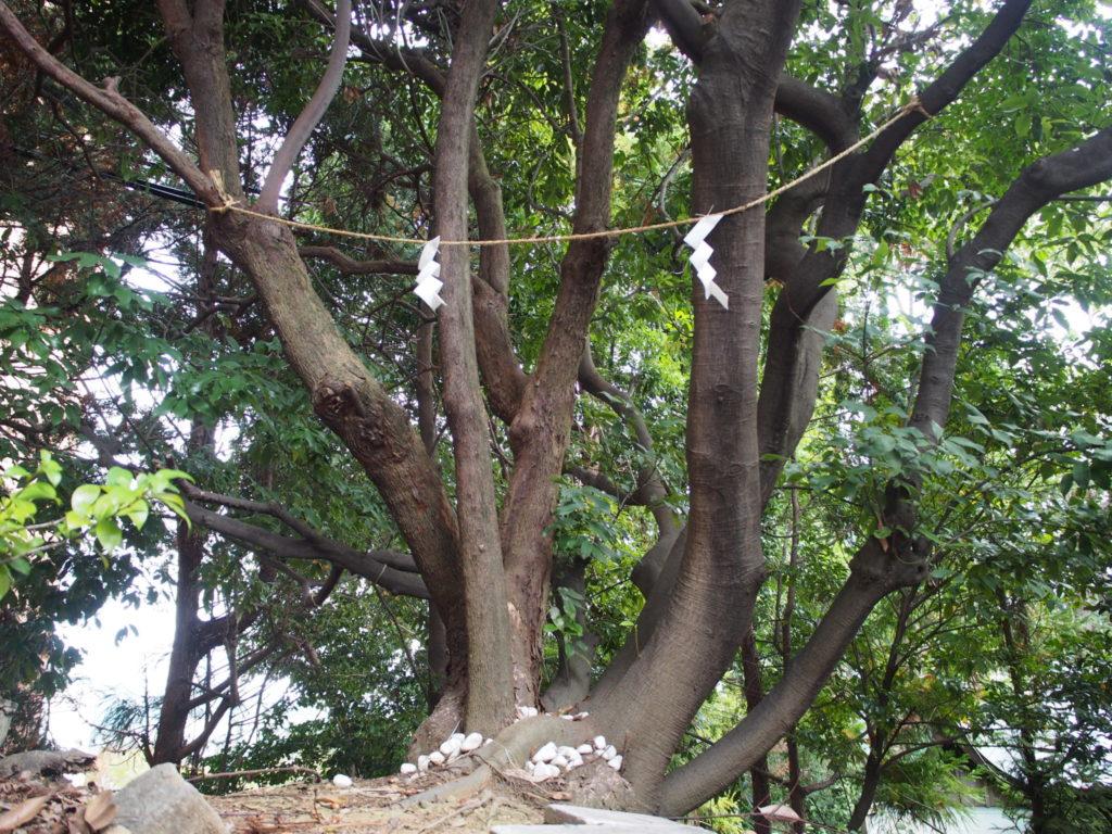 荒御霊の神木