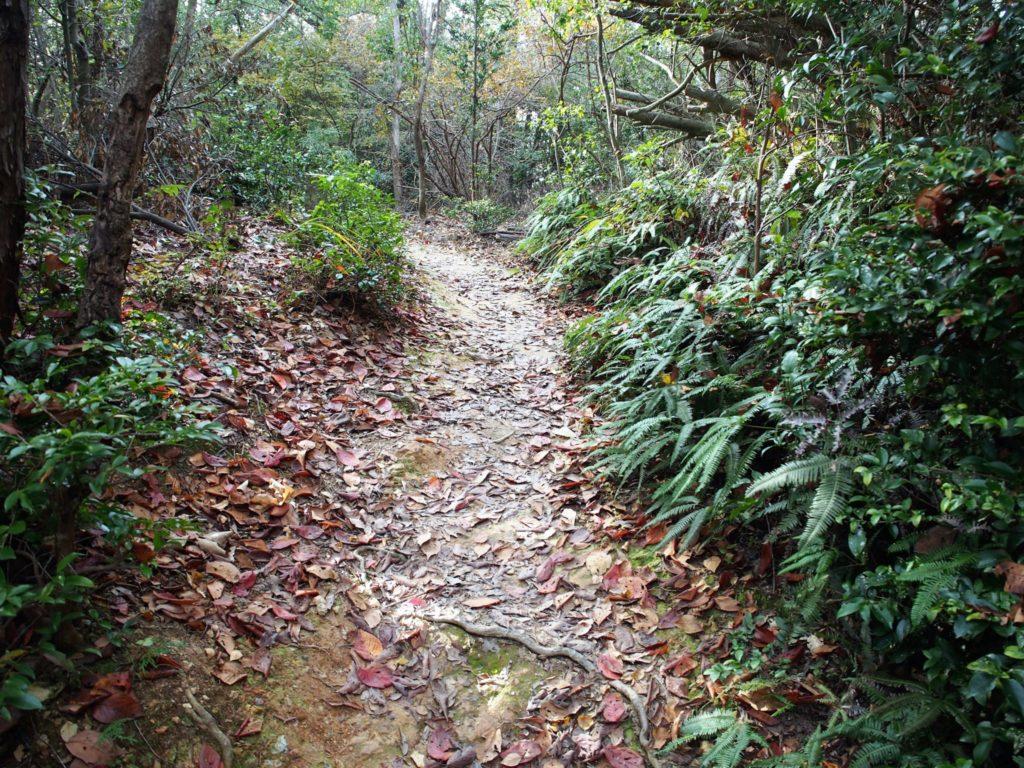 「伊勢神宮遥拝所」へ向かう鬱蒼(うっそう)とした山道