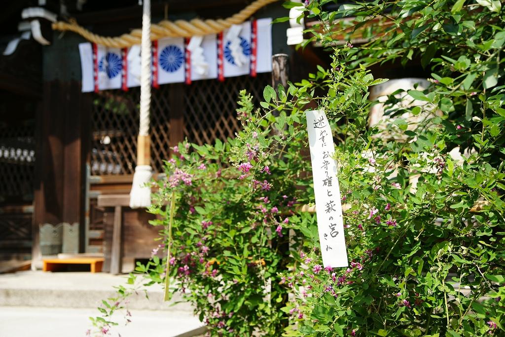 梨木神社の境内に咲き乱れる萩の花