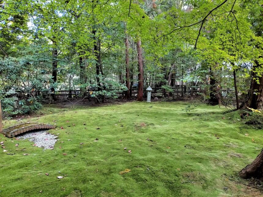 見事な苔が庭一面に広がる「野宮じゅうたん苔」
