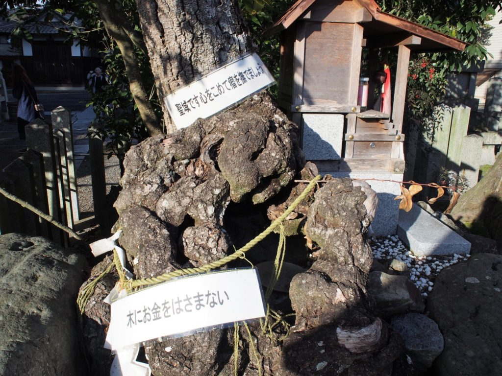 癌封治瘤の木