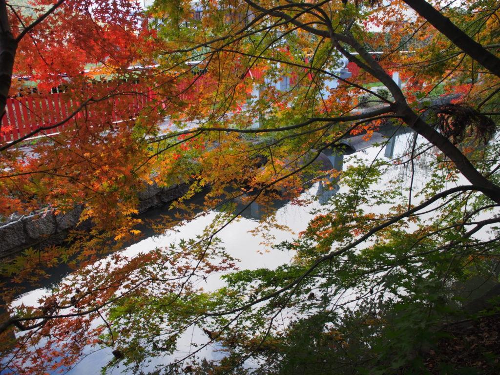 和銅禊ぎの池のもみじ