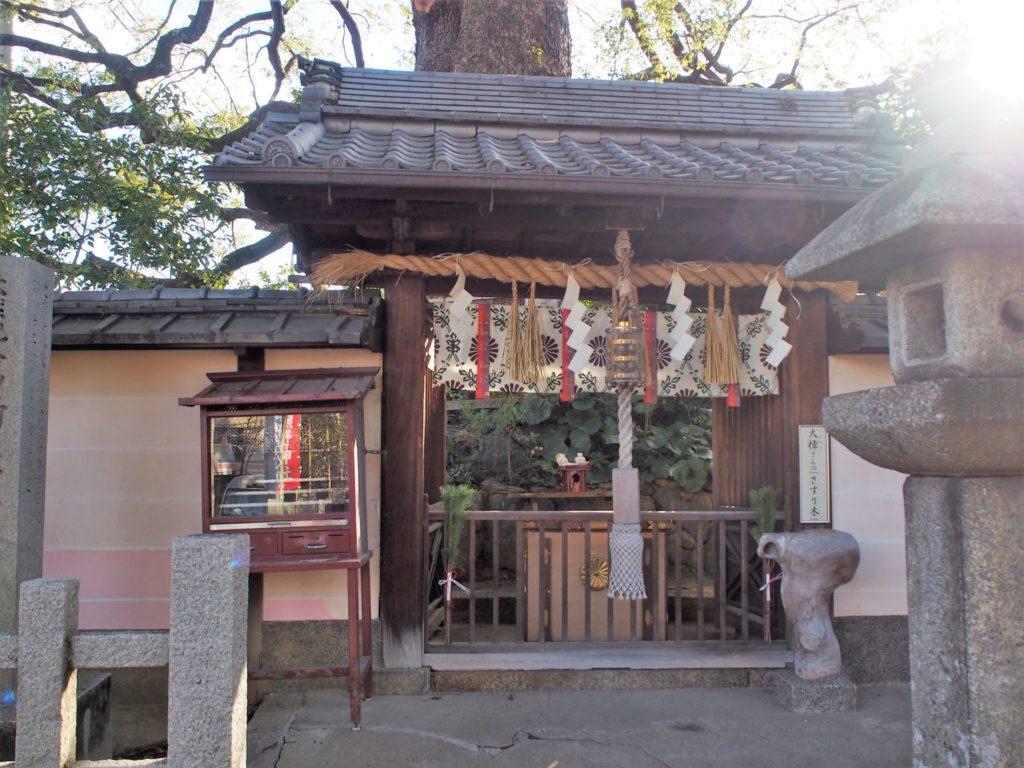 新熊野神社の樟社
