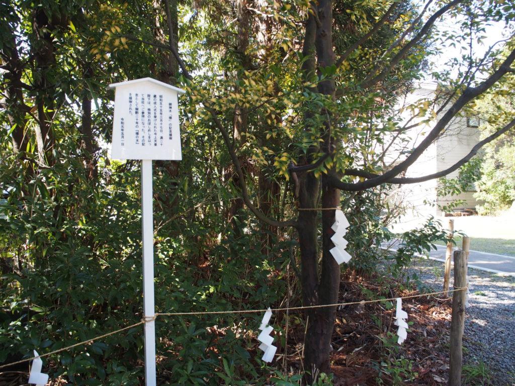 天皇陛下が二十歳の時に植樹された椥の木