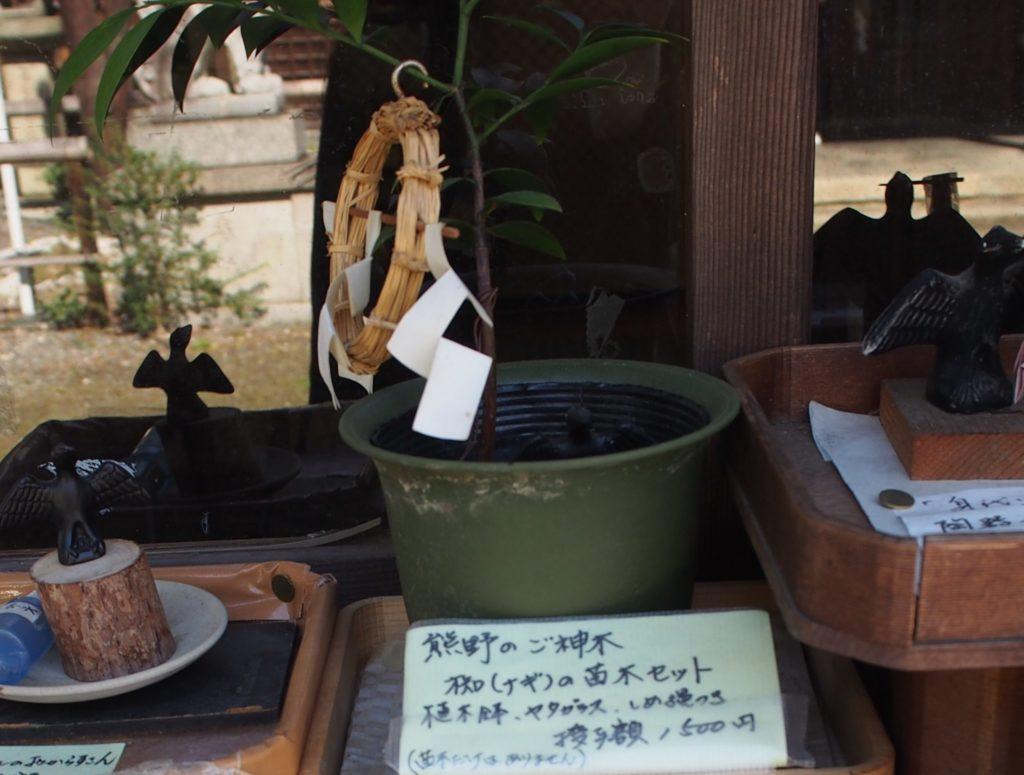 新熊野神社のご神木の「椥の苗木セット」