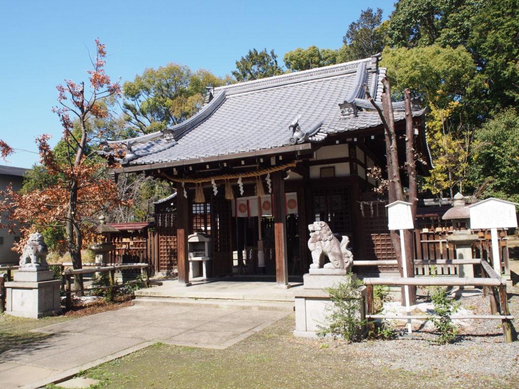 新熊野神社のご神木「椥」