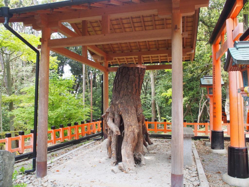伏見稲荷大社の祀られている「根上りの松」