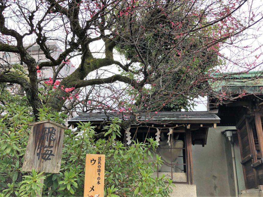 菅大臣神社の飛梅
