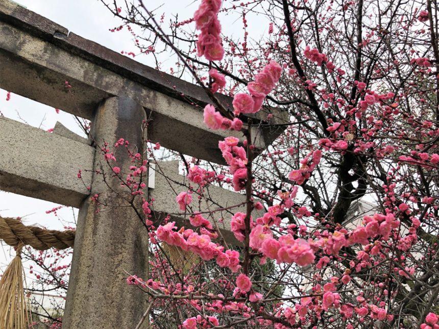 菅大臣神社の鳥居と梅