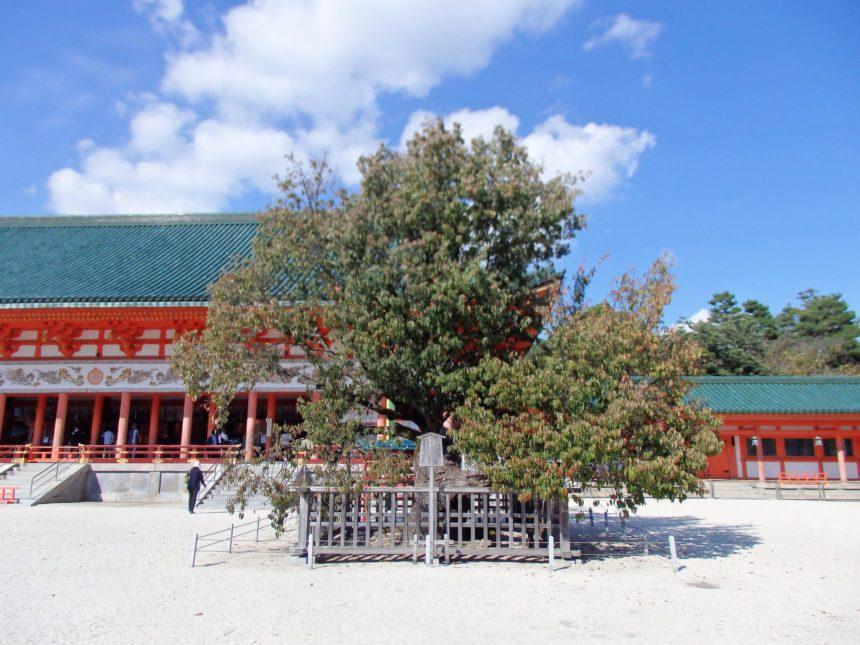 平安神宮の「左近の桜」