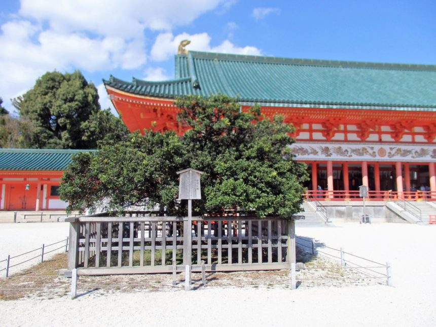 平安神宮の「右近の橘」