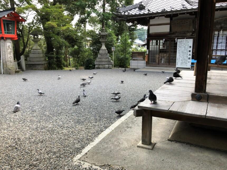 三宅八幡宮の境内の鳩